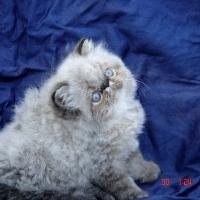 Kittens 2008