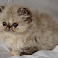 Kittens 2012