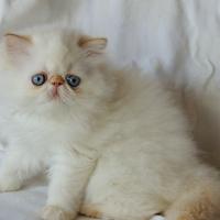 Kittens 2013