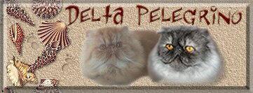 Delta Pelegrino