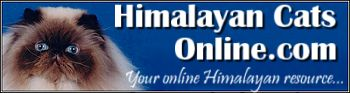 Himalayan Cats Online