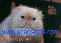 Shadi Persians