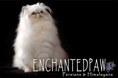 Enchanted Paws