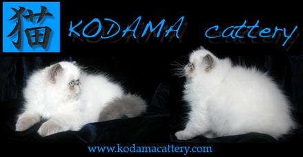 Kodama Cattery