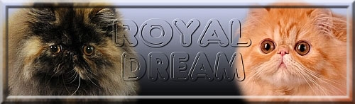 Royal Dream
